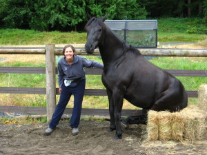Tino Sitting - Liberty Horse Training