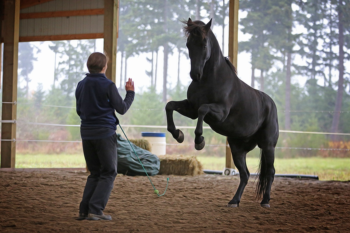 New machine designed by rollercoaster engineers is putting ... |Horse Training
